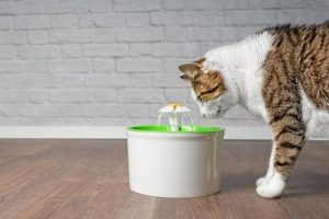 Do You Need A Cat Fountain?